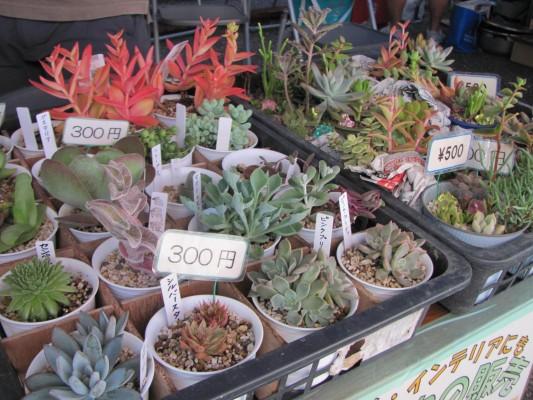 多肉植物の販売