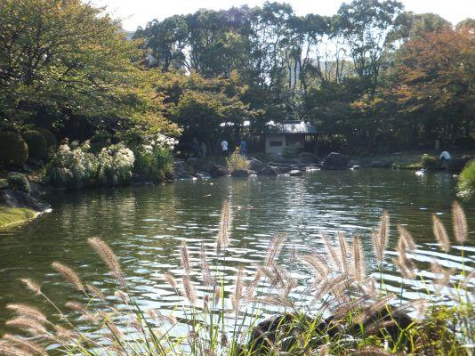 主池とススキ