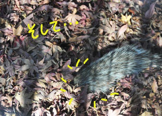 落ち葉にもぐるリス