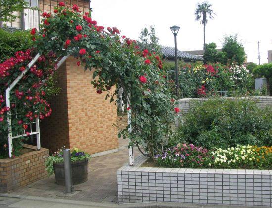 鹿骨花公園のバラ