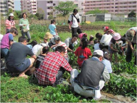 二小松農園で小松菜収穫
