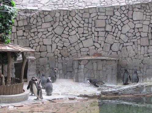 画像 日食ペンギン