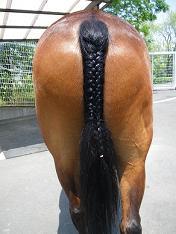編み込み尻尾