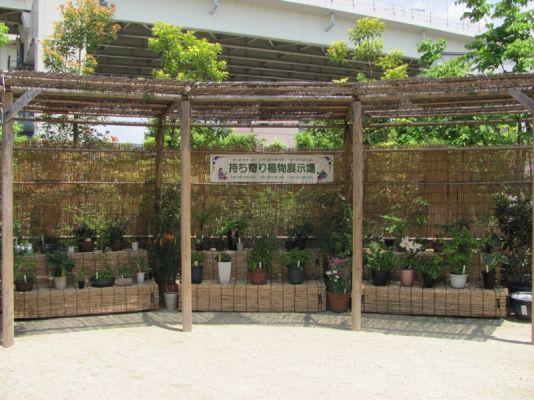 写真:持ち寄り植物展示場