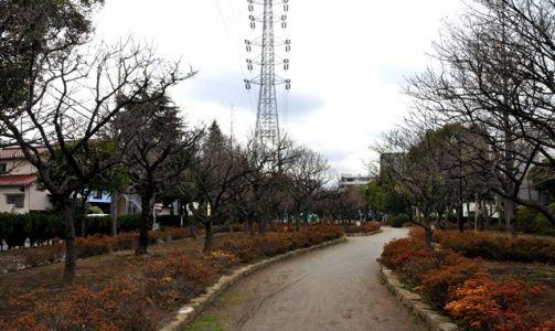 宇喜田東公園梅の木全景
