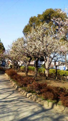 宇喜田東公園梅