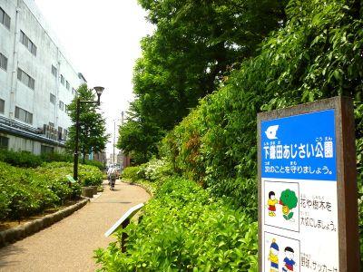下鎌田あじさい公園