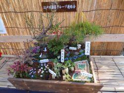 春の七草 展示2