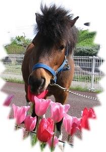 花より・・・