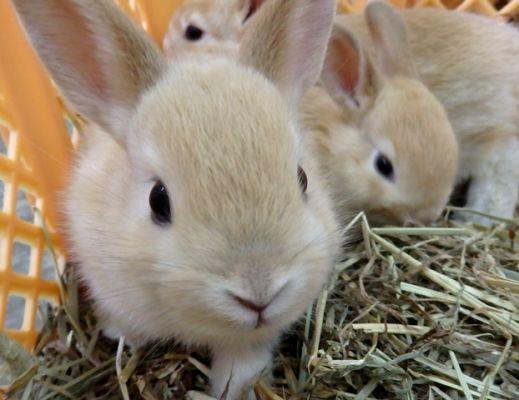 仔ウサギ1