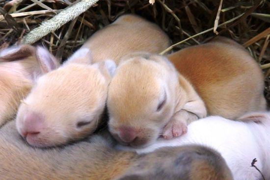 仔ウサギ3