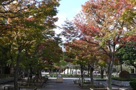 紅葉モミジ並木