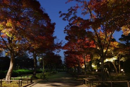 行船公園紅葉夜景モミジ並木