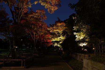 行船公園紅葉夜景モミジ並木2