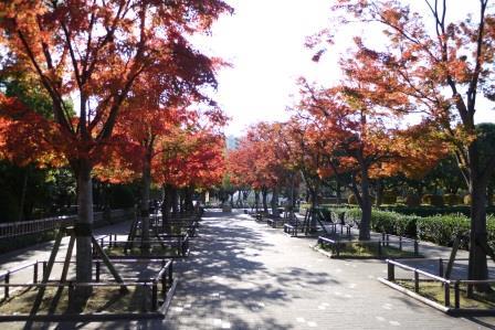 行船公園紅葉モミジ並木昼