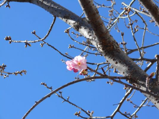 枝先に可愛らしく咲いています