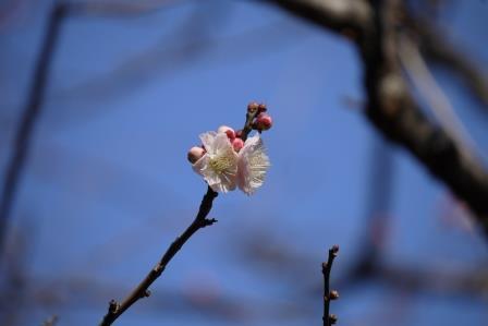おもいのまま白花