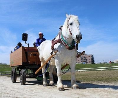 馬車の写真