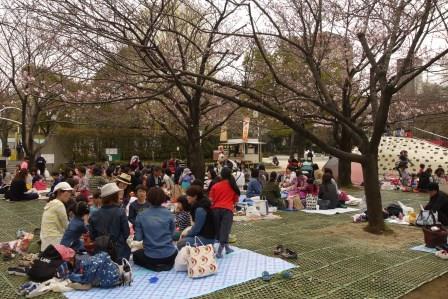 桜広場0330