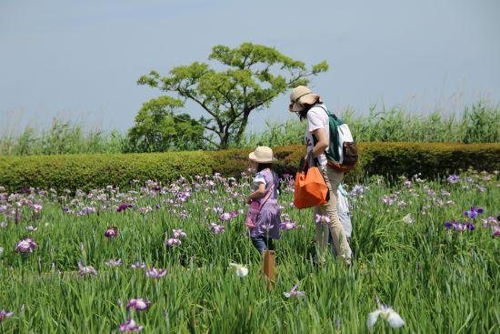 菖蒲園散歩
