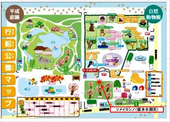 ソメイ開花map