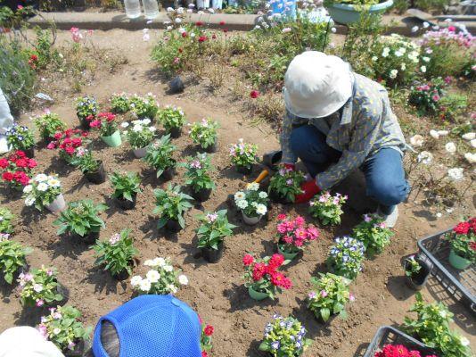 今井児童交通公園の花植え