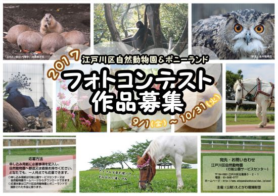 動物フォトコンテストポスター